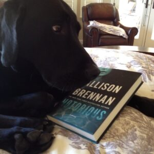 My 90 pound lab, C.S. Lewis, wishing he could read!